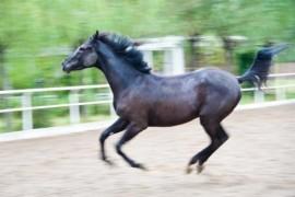 世界十大名马排行榜:纯血马速度最快,高达6400万美元
